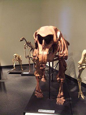 Museum Diprotodon